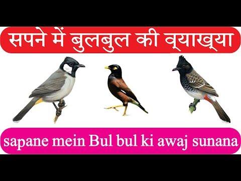Khwab Main BulBul Dekhne Ki Tabeer /parinda Dekhna Khwab Ki