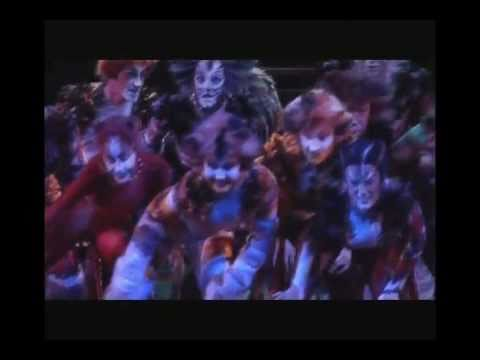 CATS -  making of