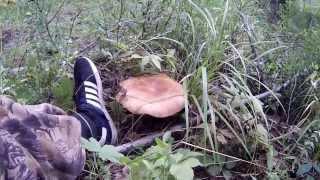 Жизнь в лесу, день первый.