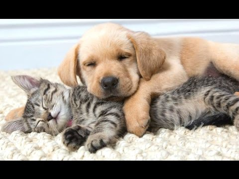 Funny Cats And Dogs Sleeping Together - A Cute Animals Videos Compilation 2015