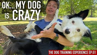 Check out my dog's new skills!