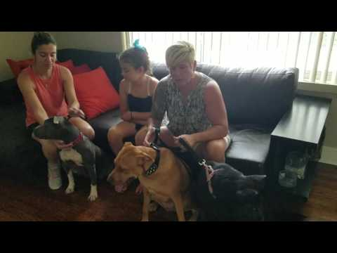 Dog Training Fort Lauderdale Reviews