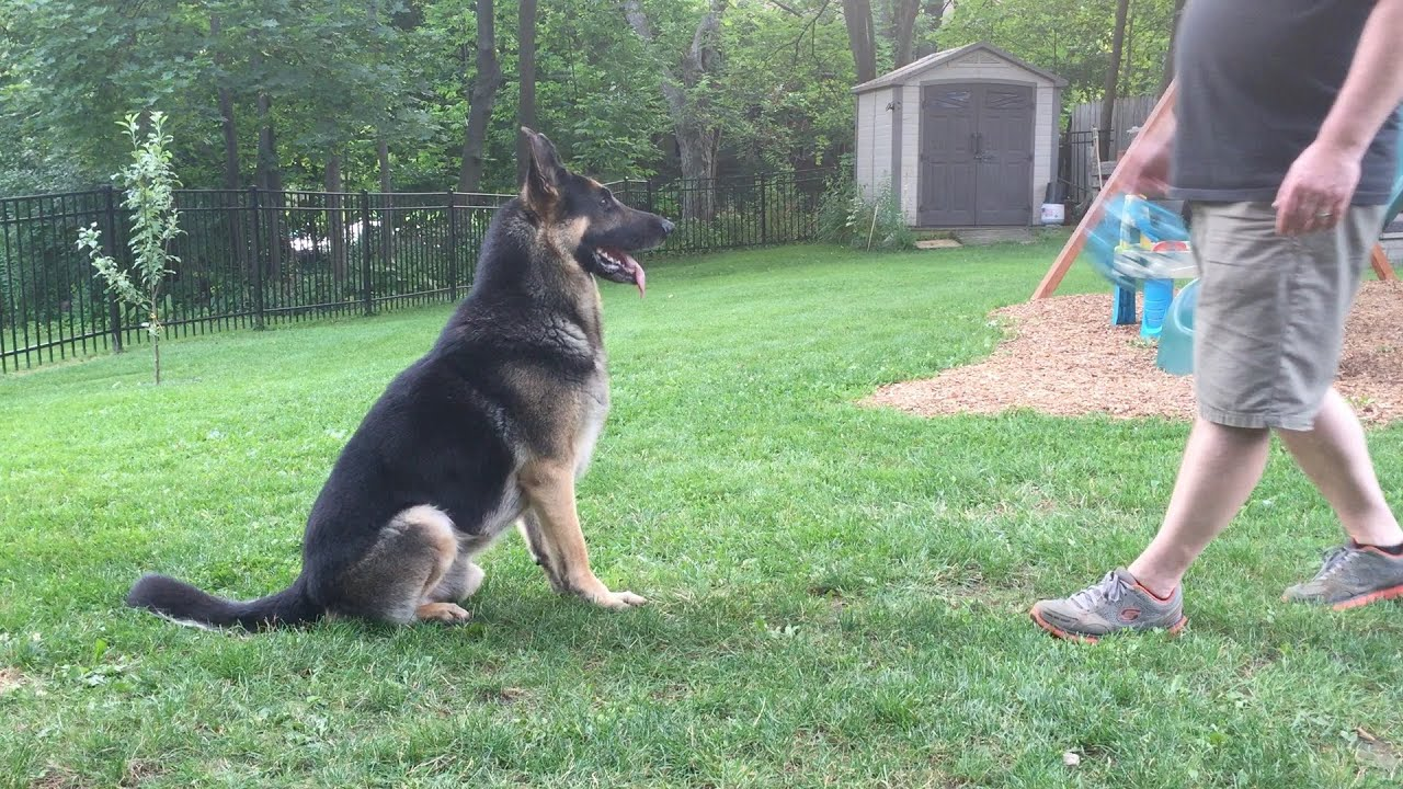 Leerburg | The Power of Training Dogs with Markers