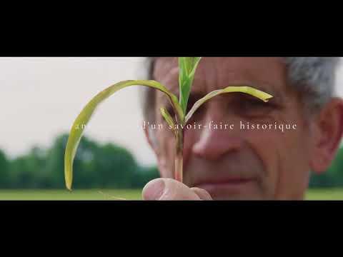 Beurre Lescure - Surgères AOP Charentes-Poitou : L'histoire d'un beurre extraordinaire