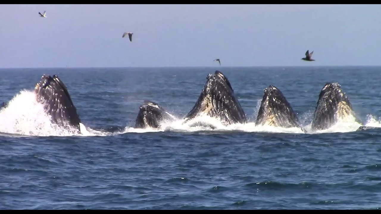 Best Whale Watching Tours Monterey