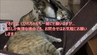 里親募集サイト掲載ページまとめ記事(※譲渡会情報も掲載) http://cat....