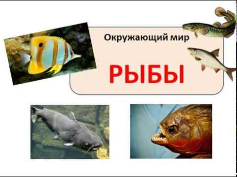 Рыбы видеоурок 2 класс