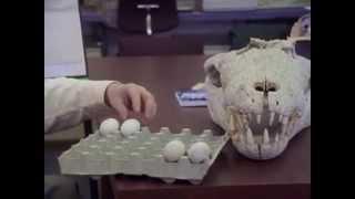 Doom of the Dinosaurs - Arthur C Clarke`s Mysterious Universe 1994