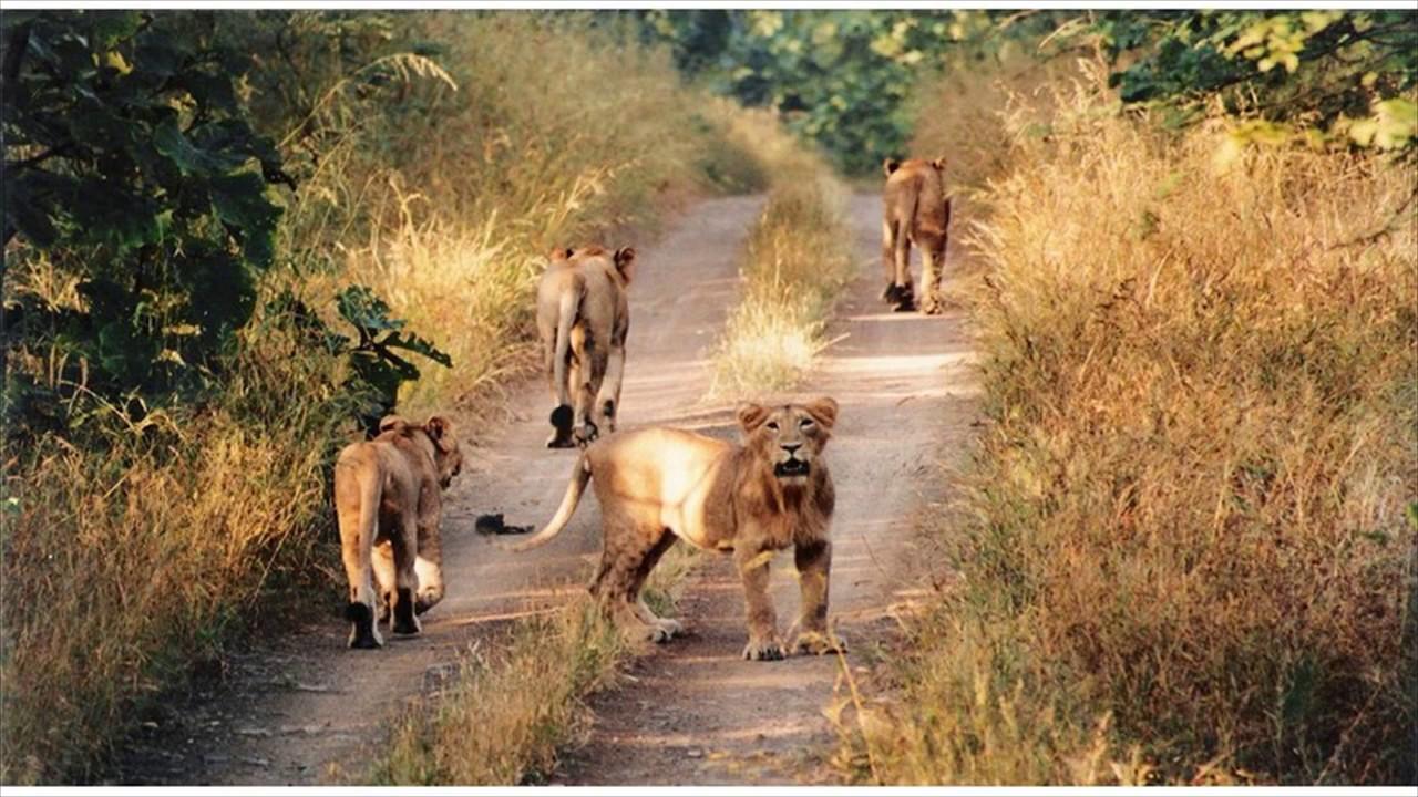 Palamau Tiger Reserve, Palamu District, Jharkhand, India by CADENCE