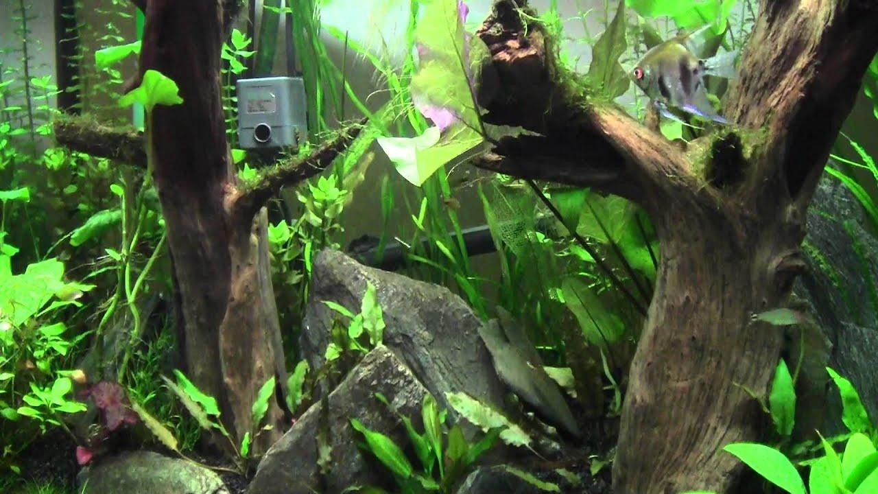 Freshwater aquarium fish milwaukee - Freshwater Aquarium Fish Milwaukee