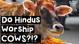 Do Hindus Worship Cows? - Hindu Beef Taboo Explained