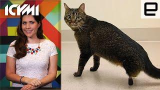 ICYMI: Pegleg cat, X-ray laser sight and recharging tabletop