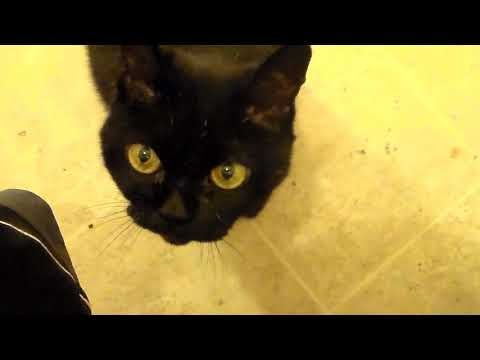 Rachel The Bombay Cat Bathroom Obsession
