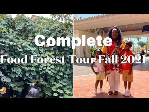 A Complete Tour of the Food Forest in the Fall 2021 and How to Kill Cabbage Worms With Neem Oil.