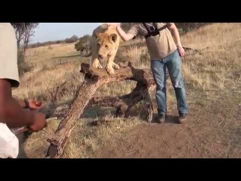 Walk with Lions - Lion Park Johannesburg