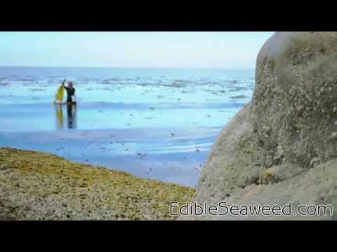 Seaweed Harvesting Site