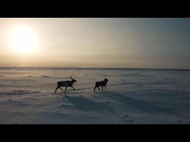Нарьян-Мар. Крайний север