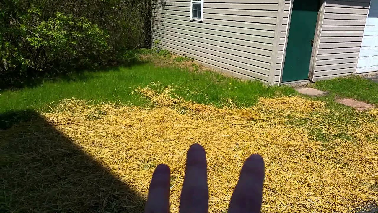 Best way to plant grass seed - Best Way To Plant Grass Seed 14
