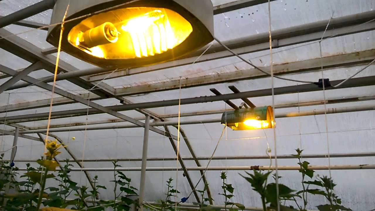 Выращивание зелени в парнике. - YouTube