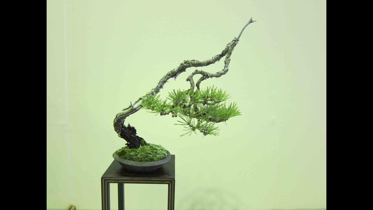 Bunjin Bonsai Style Series Youtube