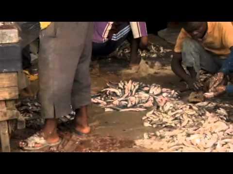 TANZANIA - DAR EL SALAM FISH MARKET