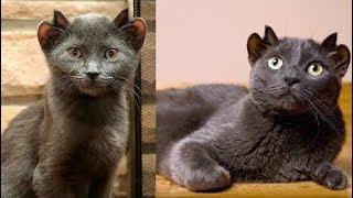 Không hoa mắt đâu! Đây đích thị là câu chuyện về chú mèo 4 tai kỳ lạ nhất thế giới đấy!
