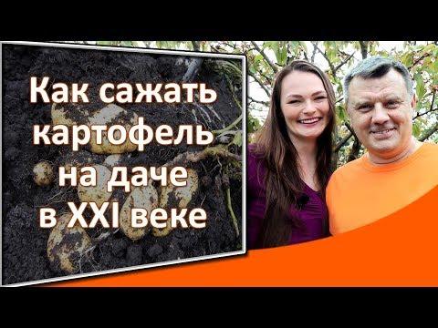 Вопрос: Почему украинцы выращивают картошку на даче?