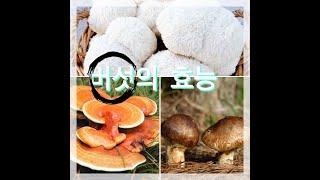 #버섯 #지식 #표고버섯 #노루궁댕이버섯 #영지버섯 버…