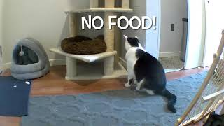 "Snoop Catt Complains About Diet and Seeks Revenge Through ""Surveillance Disabling Specialist"""