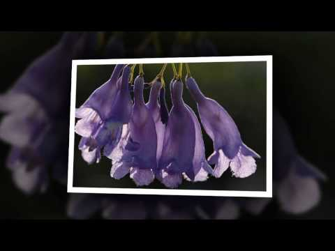 Beautiful pictures of flowers byYangming Ren 花卉美丽的图画!    楊明仁