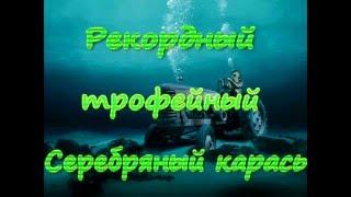 Мировой рекорд по серебряному карасю - самый большой карась в мире(Подводная охота, Фролово, рекордный серебряный карась, мировой рекорд, Волгоградская область, Иван Скворцо..., 2016-01-09T20:40:30.000Z)