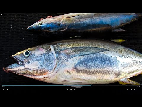 Native Sun Sport Fishing Tuna Trip 22nd St Landing