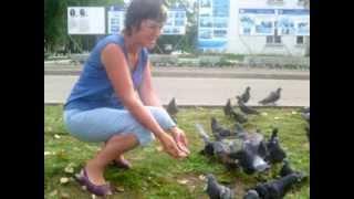 Копия видео Под небом голубым -город Шарья
