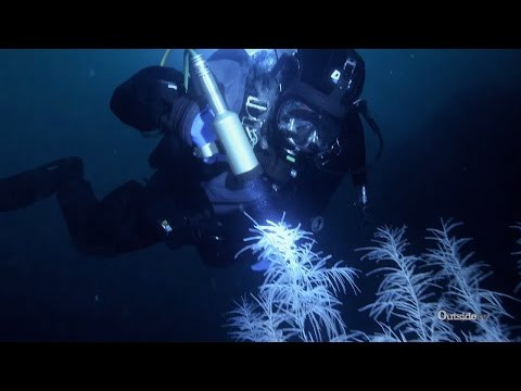Diving for Black Coral in New Zealand | Descending