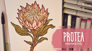 Marker Flower Protea Speed Drawing