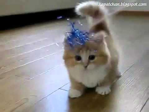 kucing kaki pendek