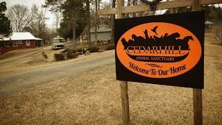 Video Tour of Cedarhill Animal Sanctuary