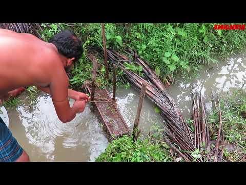 Catching Fish with 'Ghuni Trap' | Fresh fish | Fish of Bangladesh