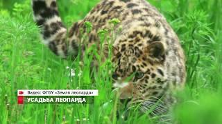 Усадьба леопарда: открыт крупнейший в мире центр сохранения редчайшей дикой кошки
