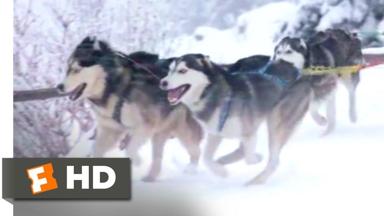 Download Sharknado 5: Global Swarming (2017) - Dog Sled vs. Snownado Scene (6/10)   Movieclips