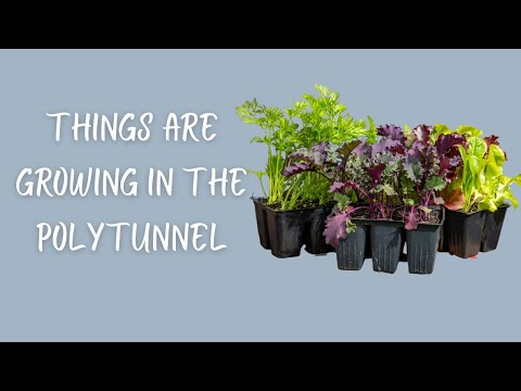 🎬 147-Things Are GROWING In The POLYTUNNEL! More GARDEN PROGRESS/SEEDS