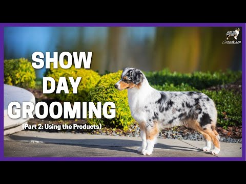 Show Day Grooming