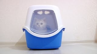 The best Cat litter box and kittens