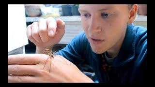 Spider Season - Giant House Spider Handling