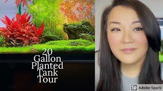 20 gallon Planted Tank Tour