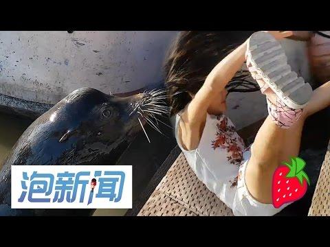 22/05: 码头边逗海狮 女孩被叼落海