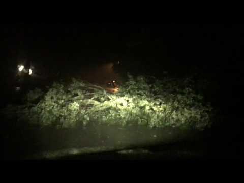 GAINESVILLE, FLORIDA Tree Blocking Roadway  #HurricaneIrma