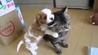 Щенок прикольно играет с котенком Видео