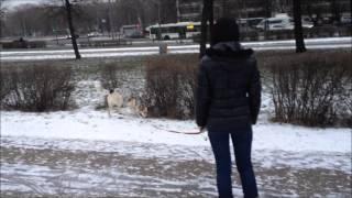 Поисковые игры с собакой