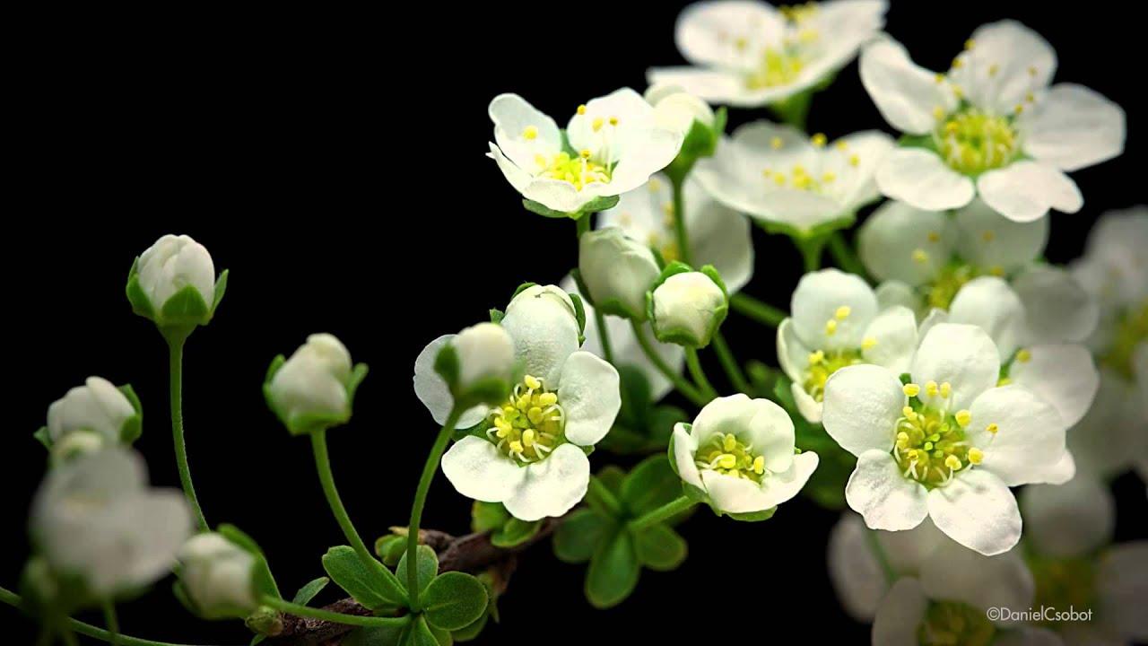 Macro timelapse ver las flores crecer youtube for Ver plantas ornamentales